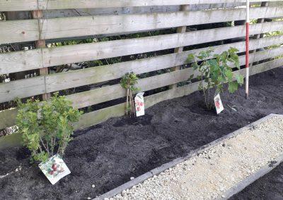 Eetbare beplanting aanbrengen