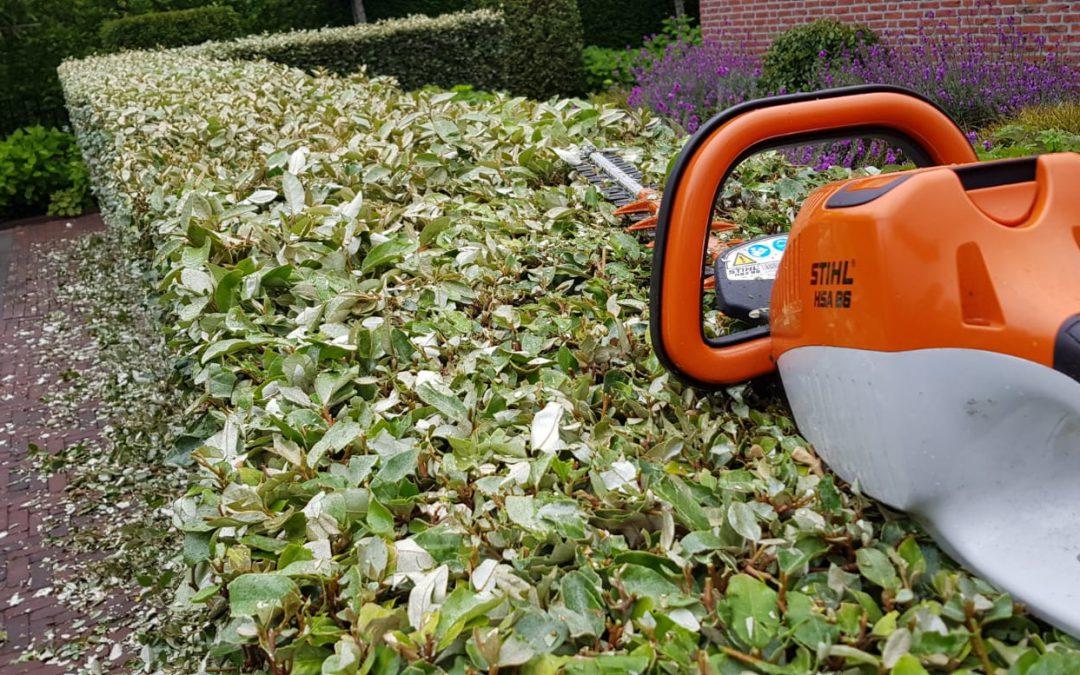 Hoogste tijd om uw hagen te snoeien